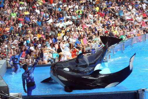 What SeaWorld's Sinking Stock Really Means