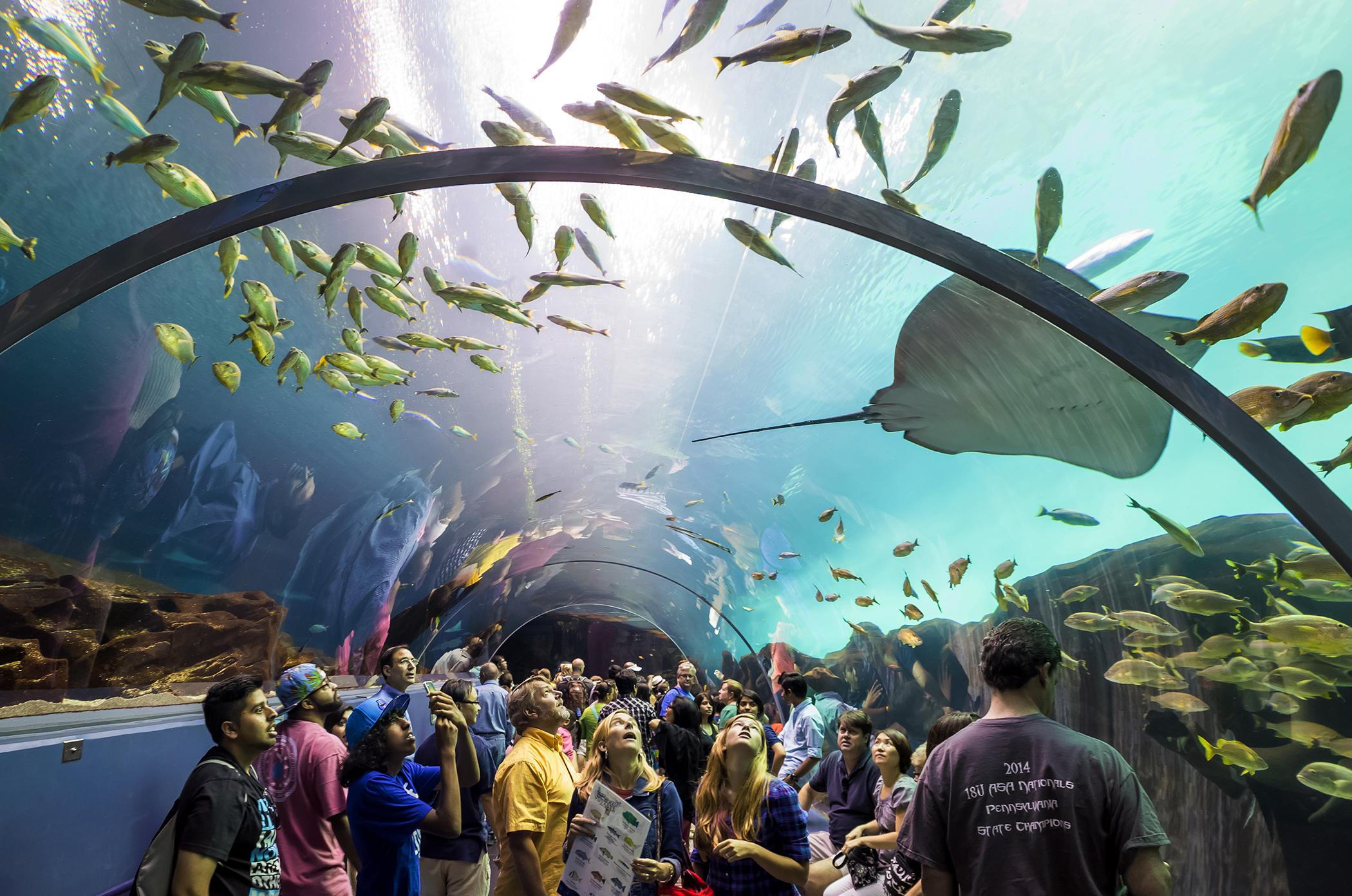 Interior of Georgia Aquarium, the world's largest aquarium holding more than 8 million gallons of water in Atlanta, Georgia on August 2, 2014