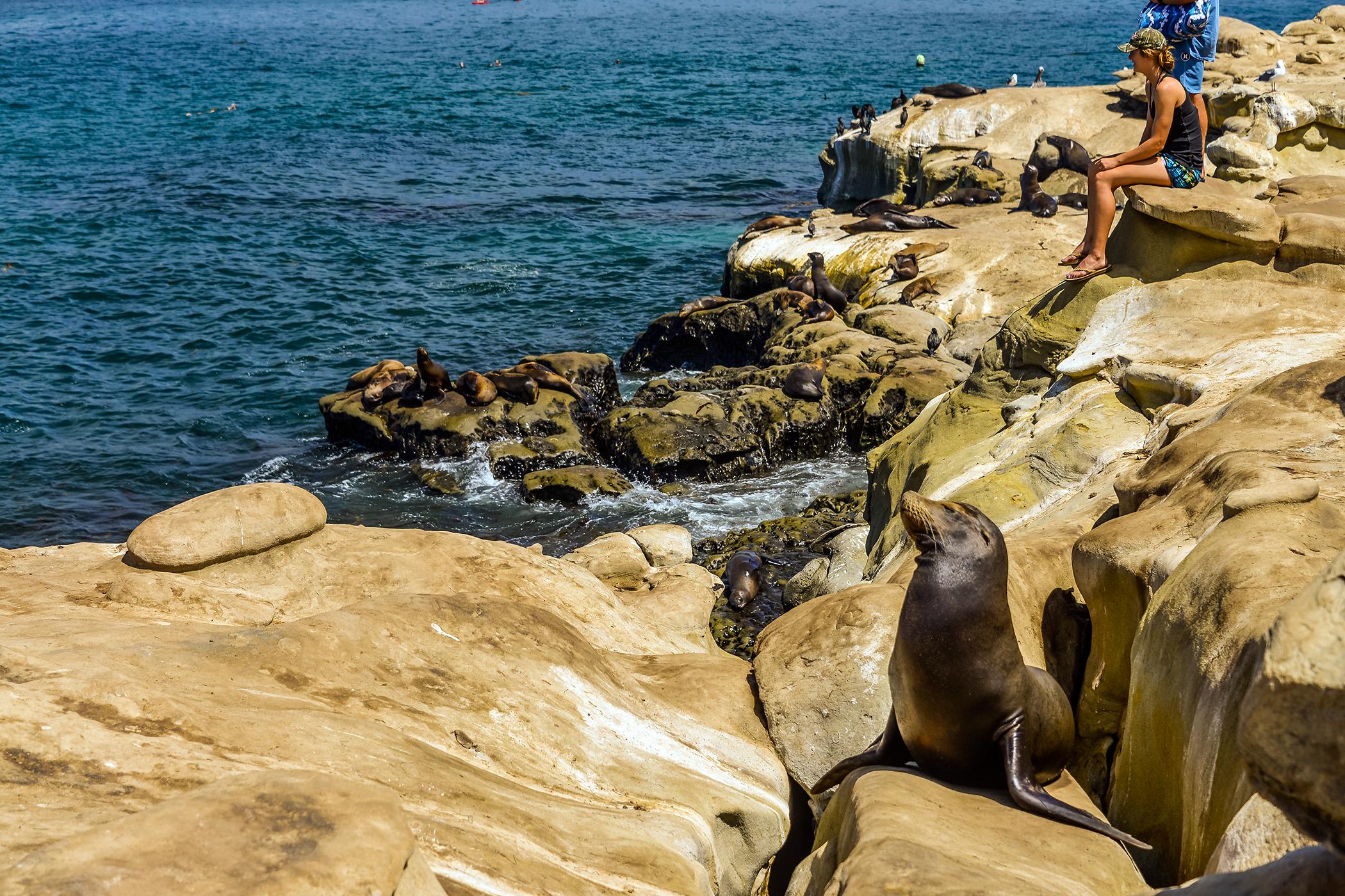 151028_COLL_BeachBums_UCSanDiego