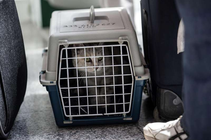 A pet cat sits in a carrier with passengers waiting at Rome Airport in Rome, May 7, 2015.