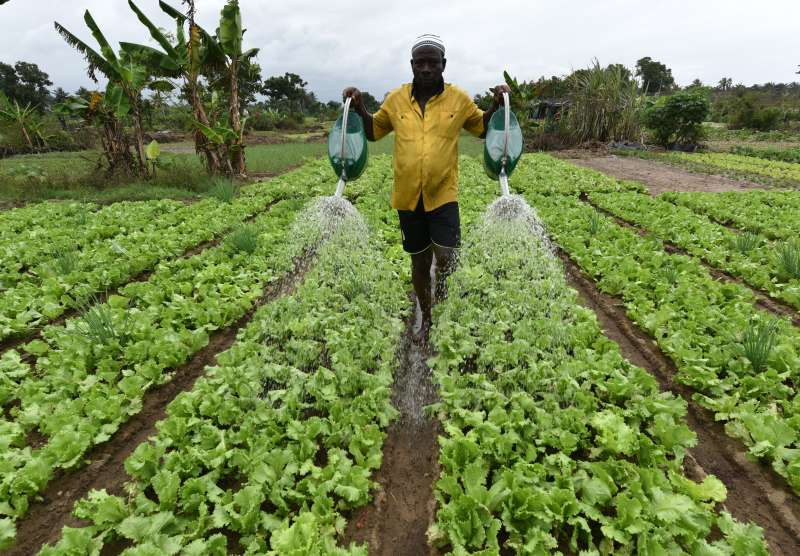 A local man waters his lettuces in an allotment in Port-Bouet, a district of Abidjan.