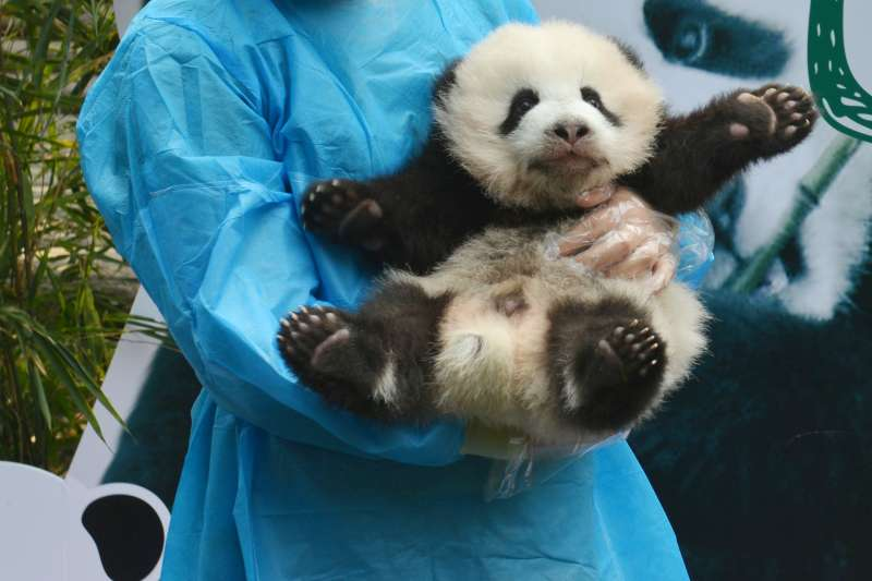 If you can't  get a job as a professional panda hugger, try these other careers that keep workers happy.