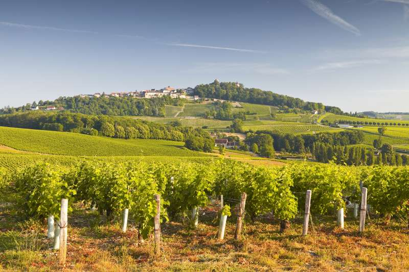 The vineyards of Sancerre in the Loire Valley, France