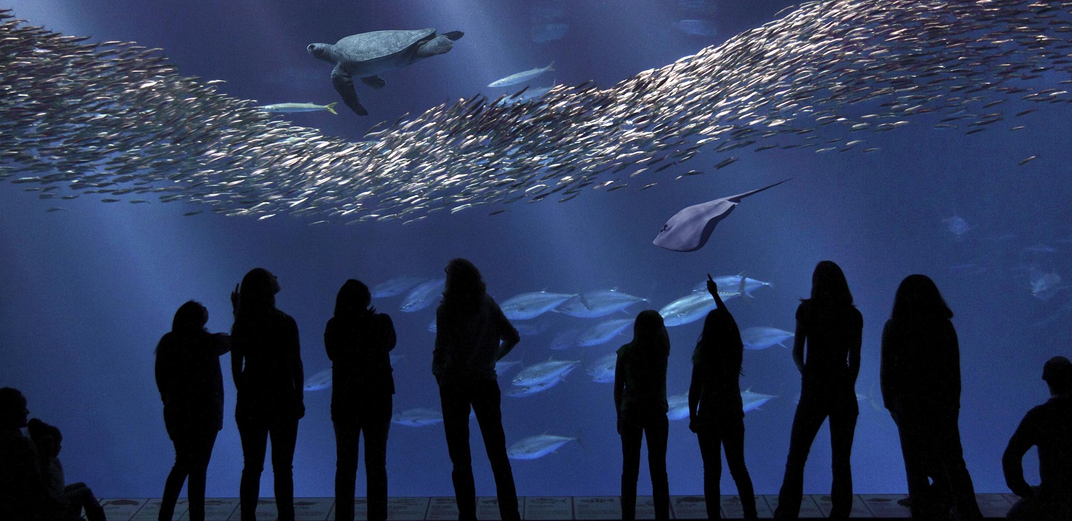 Visitors view the newly renovated Open Sea exhibit, Monterey Bay Aquarium