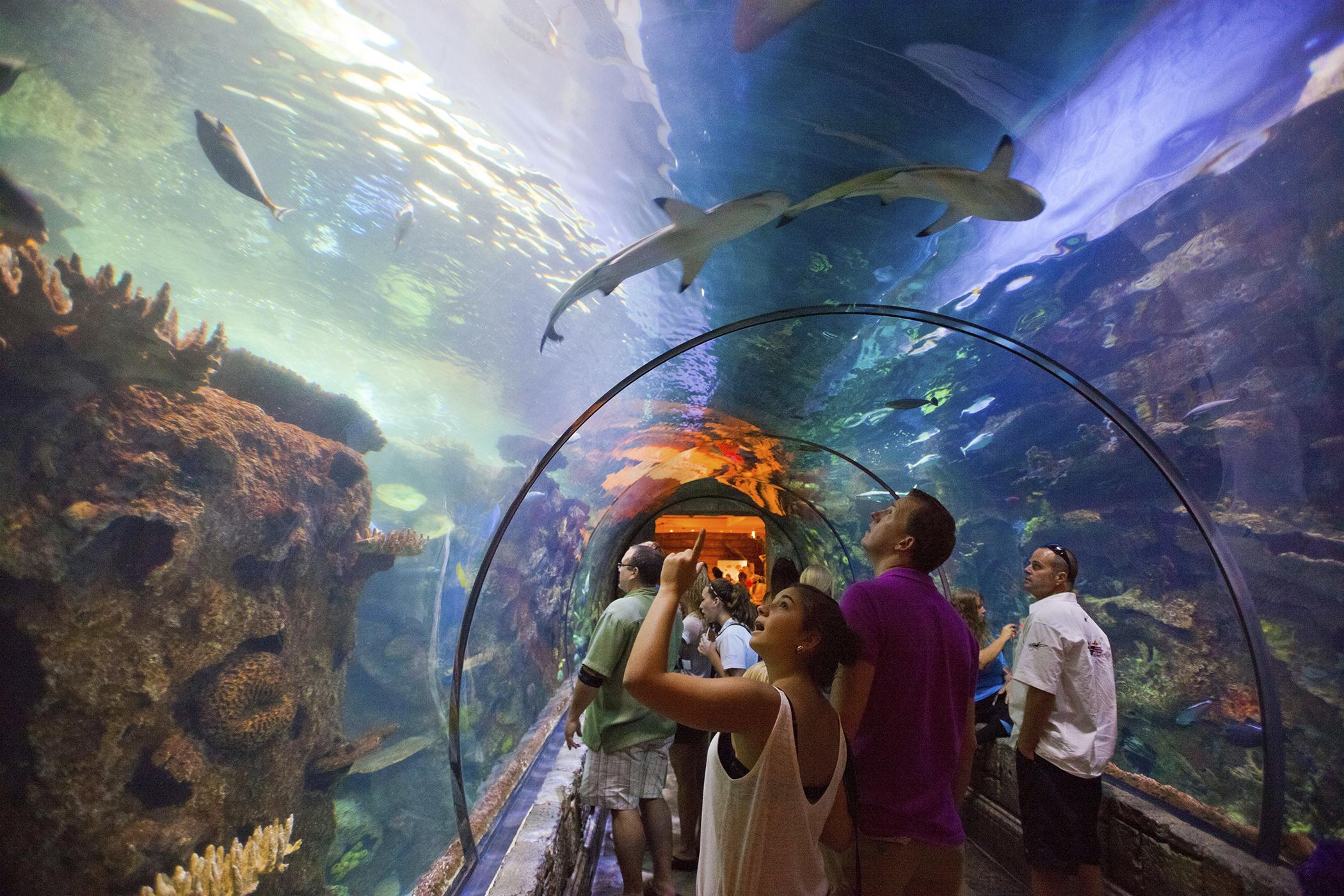Shark Reef, Mandalay Bay, Las Vegas, Nevada