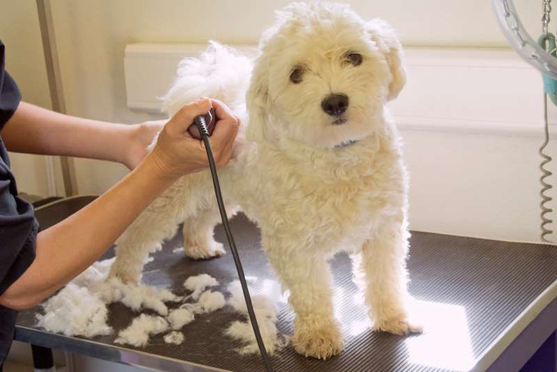 Dog groomers are among the top 3 professions reporting underemployment.