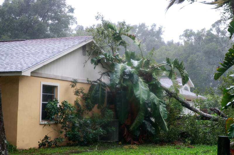 A downed tree from high winds rests against the side of a home in residential community after Hurricane Matthew passes through Ormond Beach, Florida.