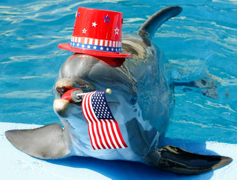 Liberty, an Atlantic bottlenose dolphin, dons a hat and carries an American flag in his mouth at Six Flags Discovery Kingdom Thursday, July 1, 2010, in Vallejo, Calif. The dolphin was named Liberty as he was born on the fourth of July in 1990, and will celebrate his 20th birthday on Sunday, the fourth of July.