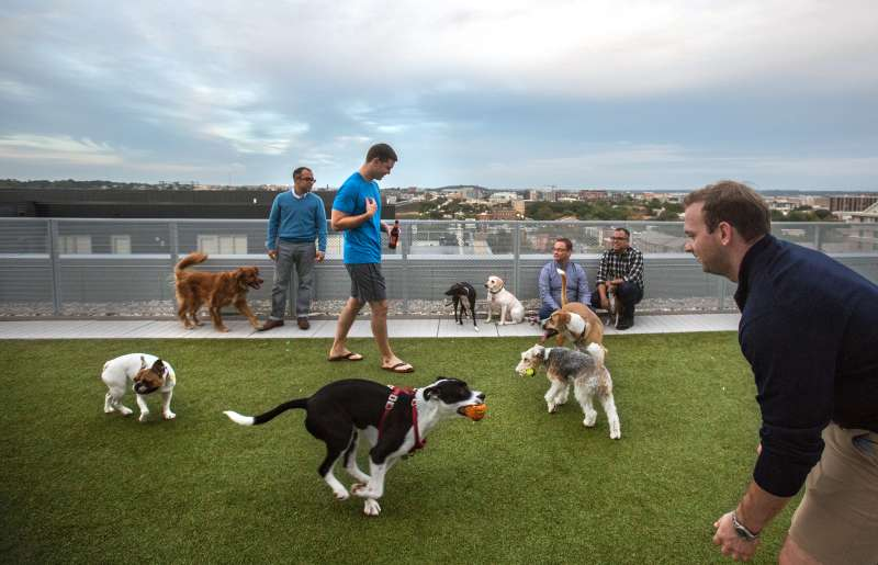 The rooftop dog park at City Market at O Street apartments is busy at the end of the workday, October 7, 2016, in Washington, DC. As new apartment buildings continue sprouting around downtown DC, developers know that a large percentage of renters in the city have dogs and make their choices of buildings based largely on pet-friendliness.