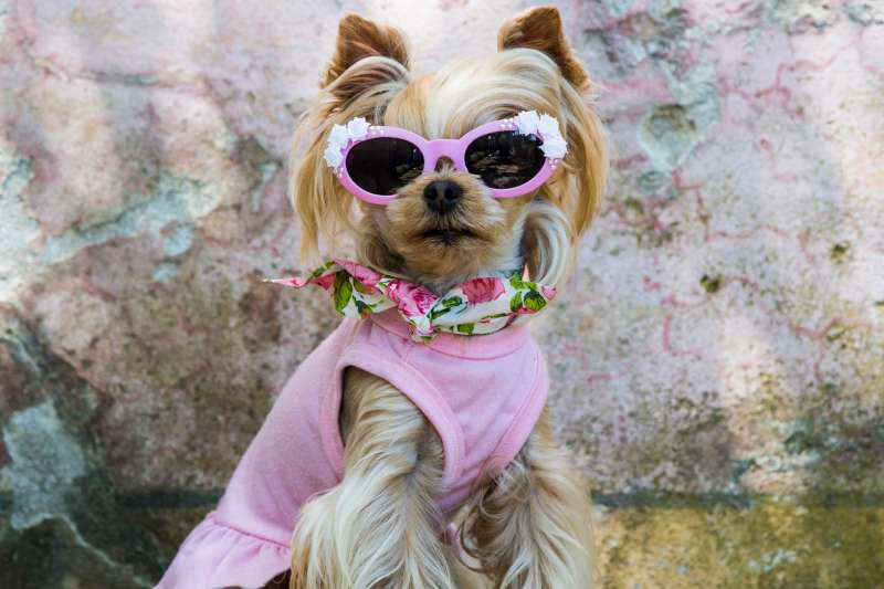 Little Lola Sunshine wears a pink dress and sunglasses in Florence, Italy.