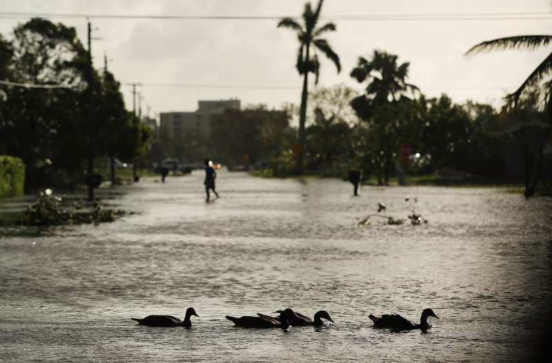 Ducks swim through a street the morning after Hurricane Irma swept through the area on September 11, 2017 in Naples, Florida.