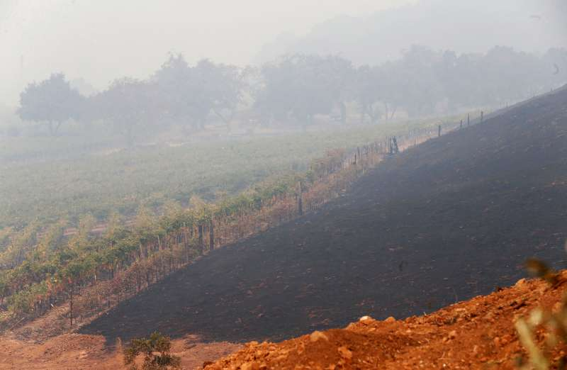 California wildfires have destroyed Signorello Vineyards in Napa, Calif., photographed here on Oct. 10, 2017.