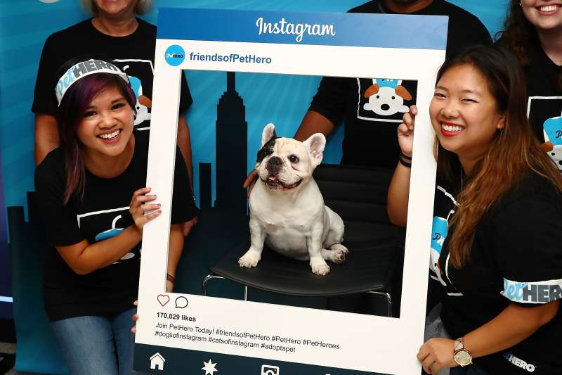 French bulldog 'Manny The Frenchie' attends Time Inc.'s PetHero Pet Party to benefit animals impacted by the recent hurricanes at 225 Liberty on September 28, 2017 in New York City.