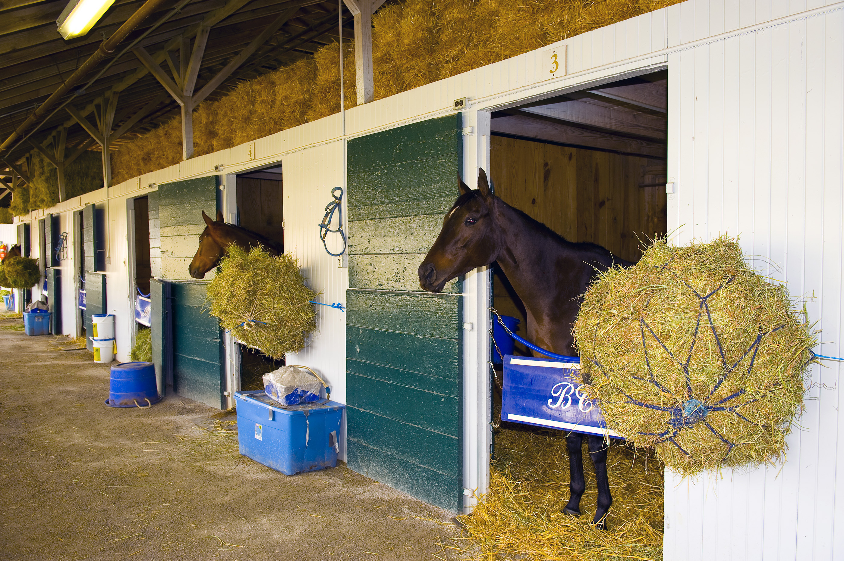 Horses in the stables at Keeneland Race Course