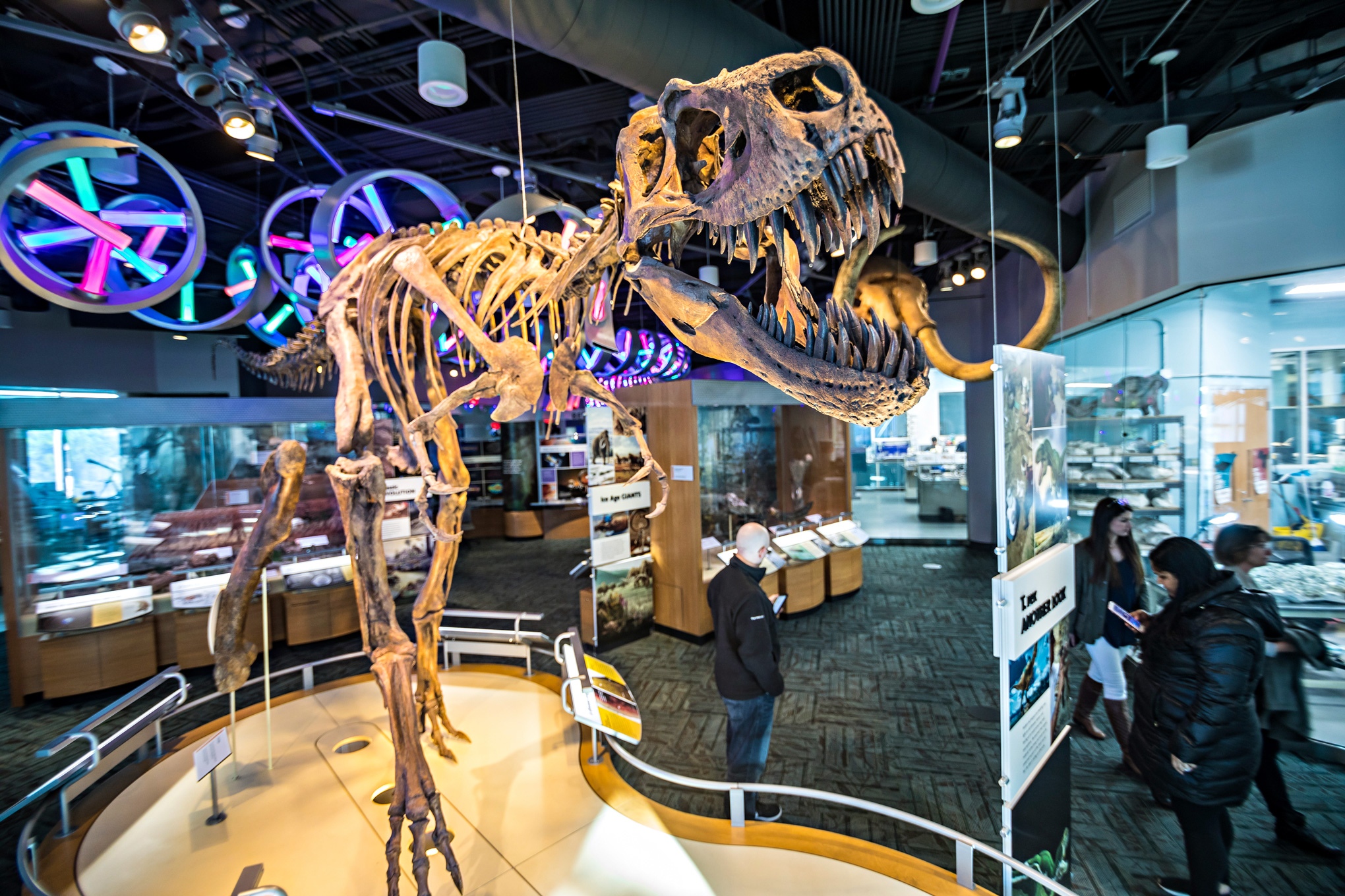 A T. rex fossil keeps watch at the North Carolina Museum of Natural Sciences.