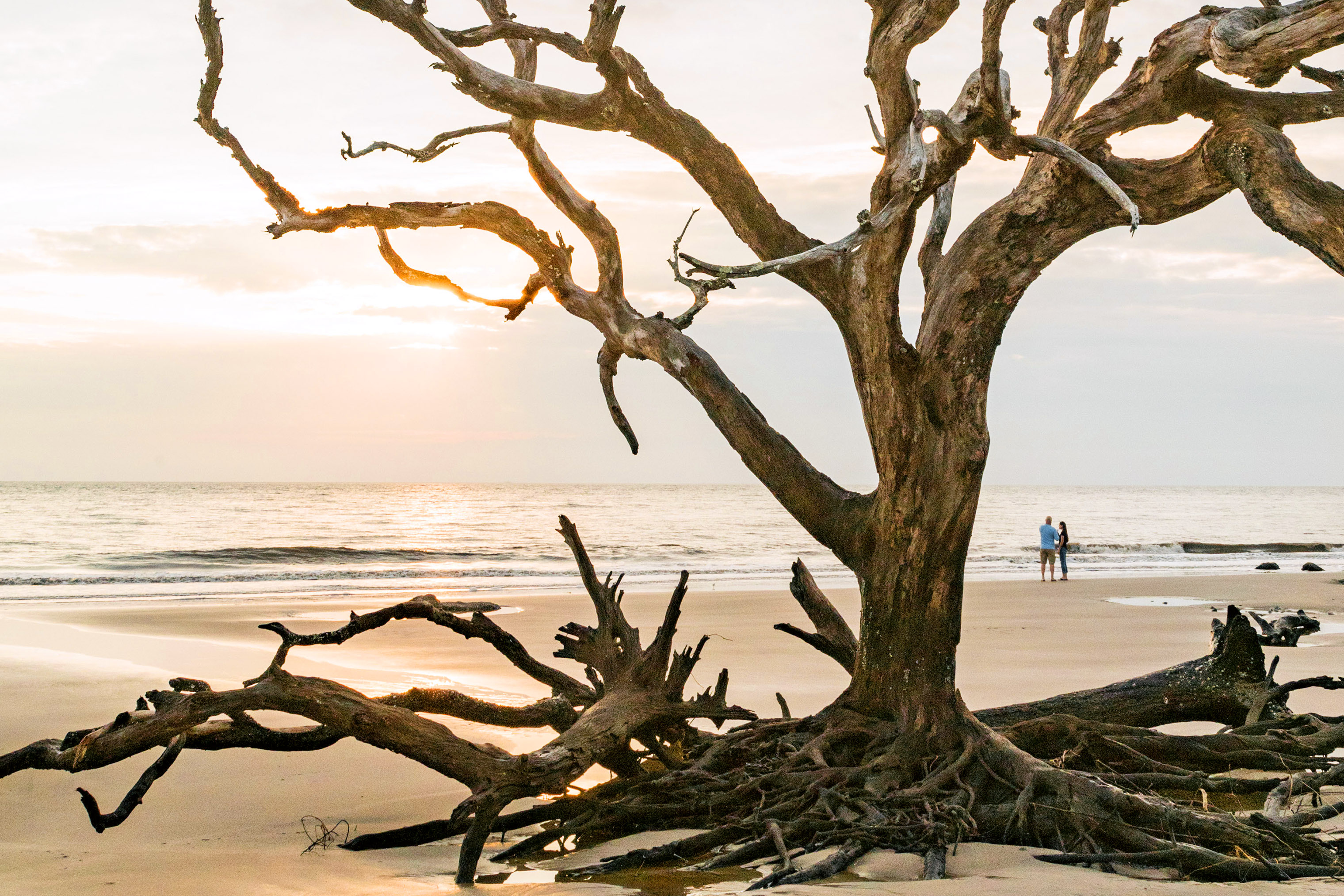 Jekyll Island's Driftwood Beach features a shoreline unlike any other.