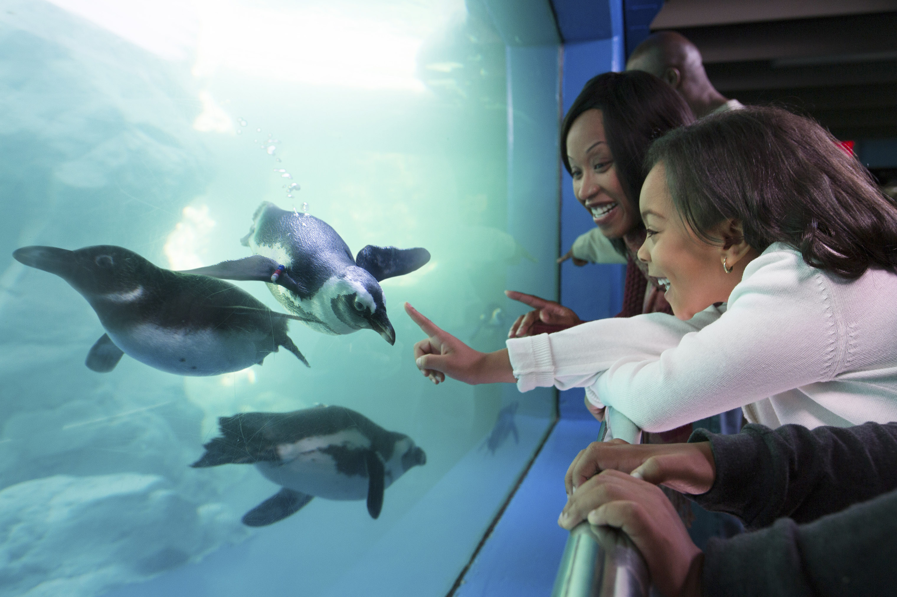 Visitors can meet wildlife up close at the national- award-winning Mystic Aquarium.