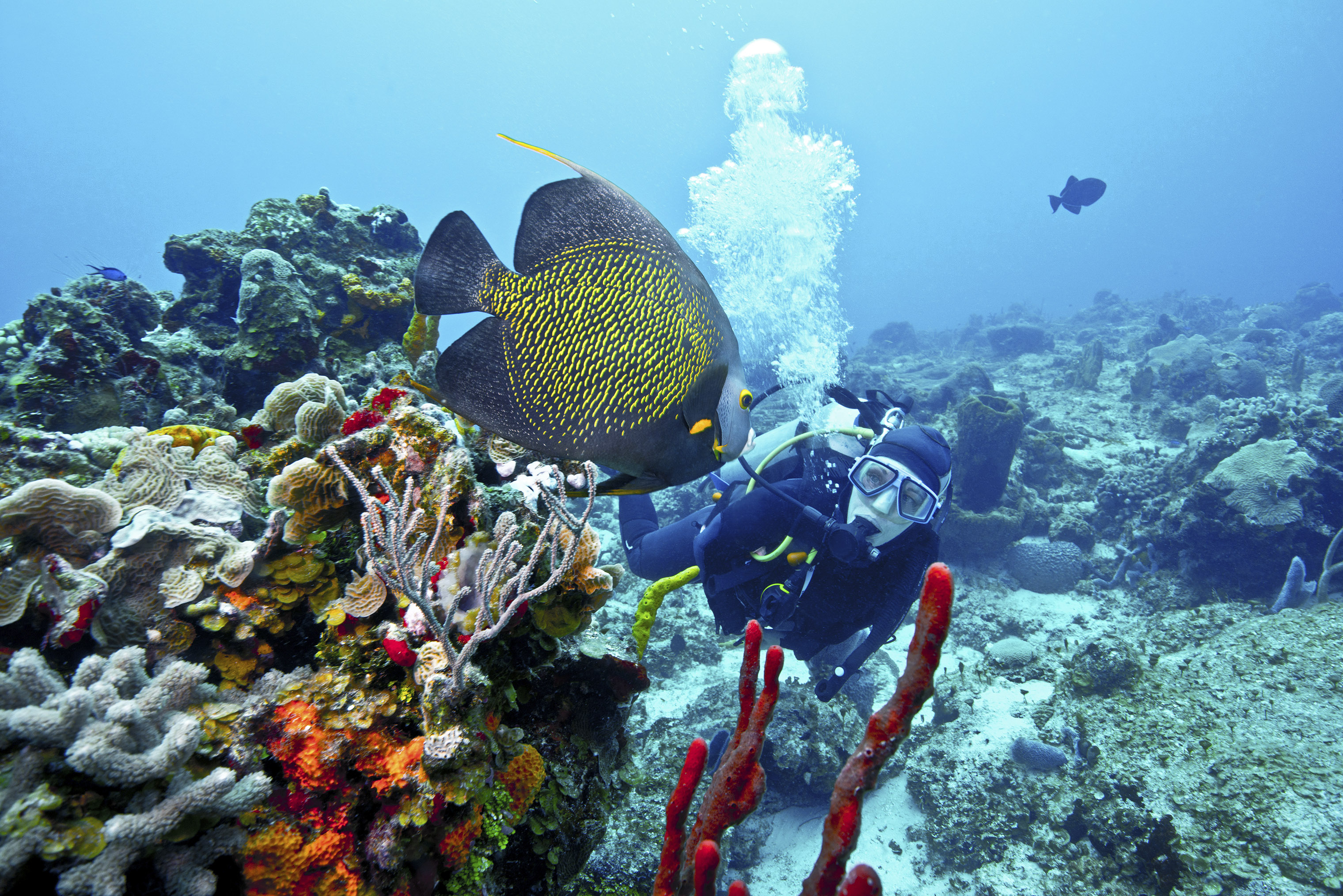 Snorkelers and divers can spot numerous sea creatures in Cozumel's waters.