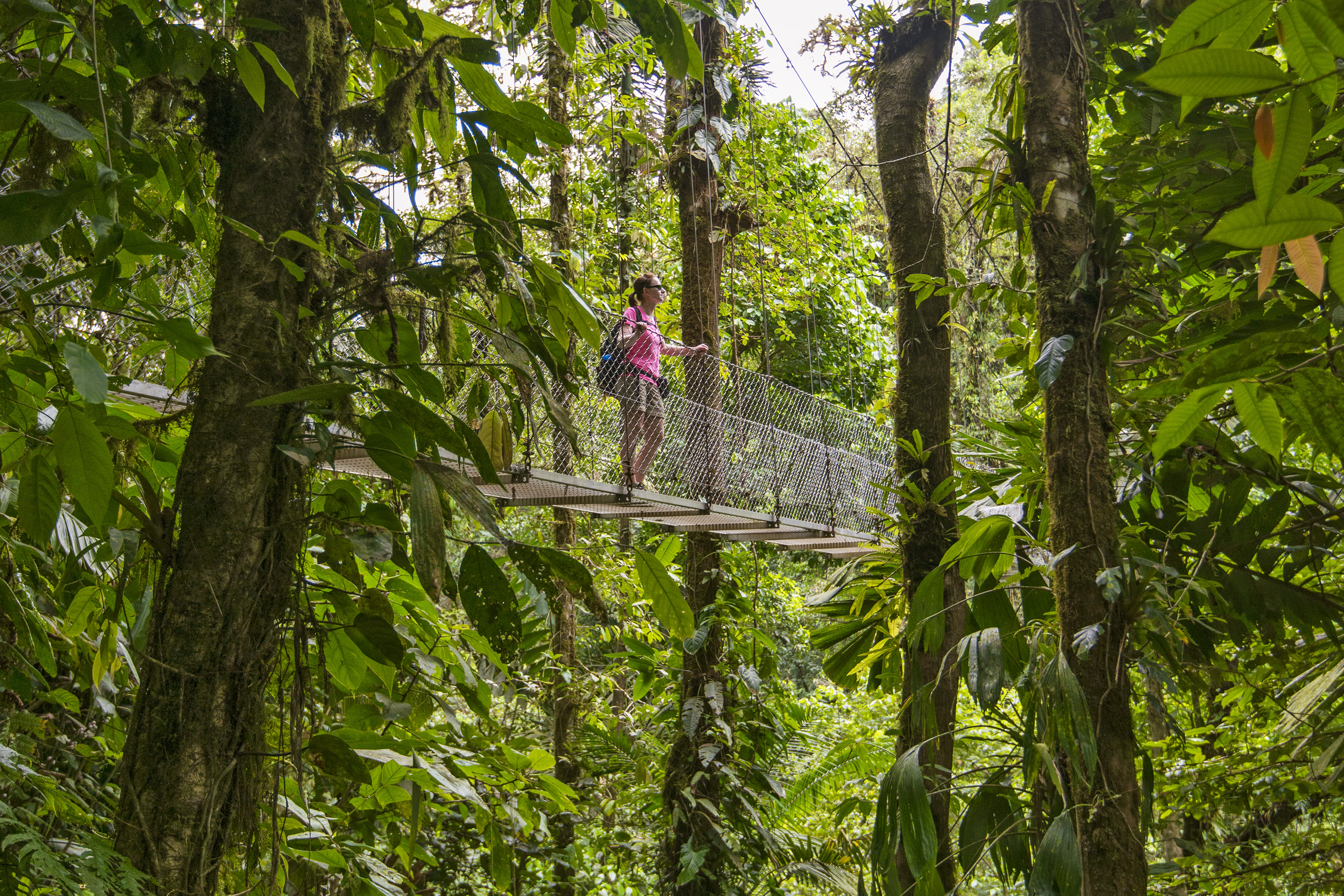The Monteverde Cloud Forest Reserve gives visitors an up-close view of the region's vast biodiversity.