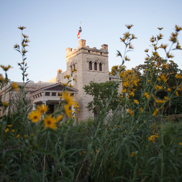field of flowers with older building in the background in Hyde Park Austin, Texas