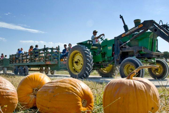 Tractor on a pumpkin patch in Bellevue, Nebraska