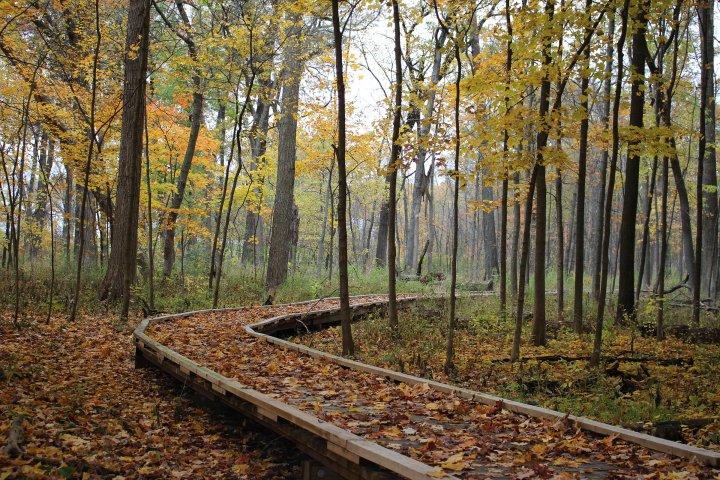 trail in the forest in vernon, illinois