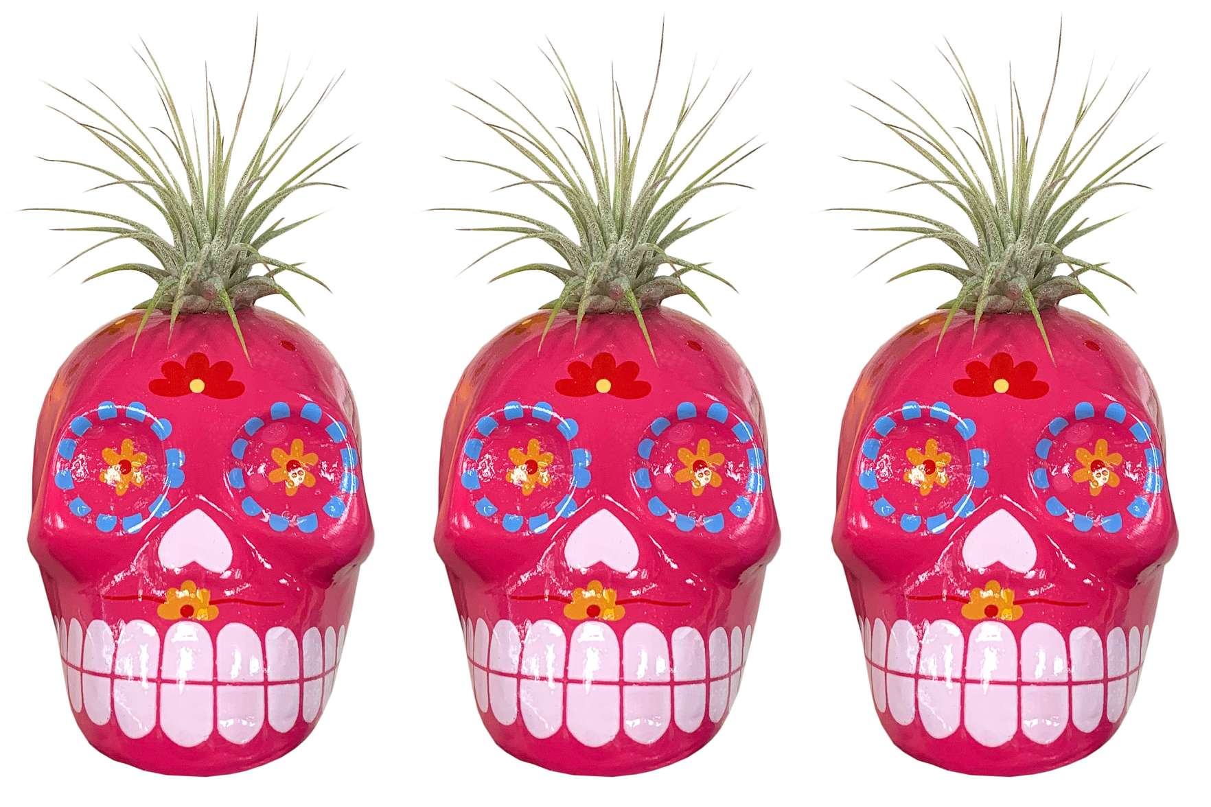 Trader Joe's Sugar Skull SucculentsCredit: Trader Joe's