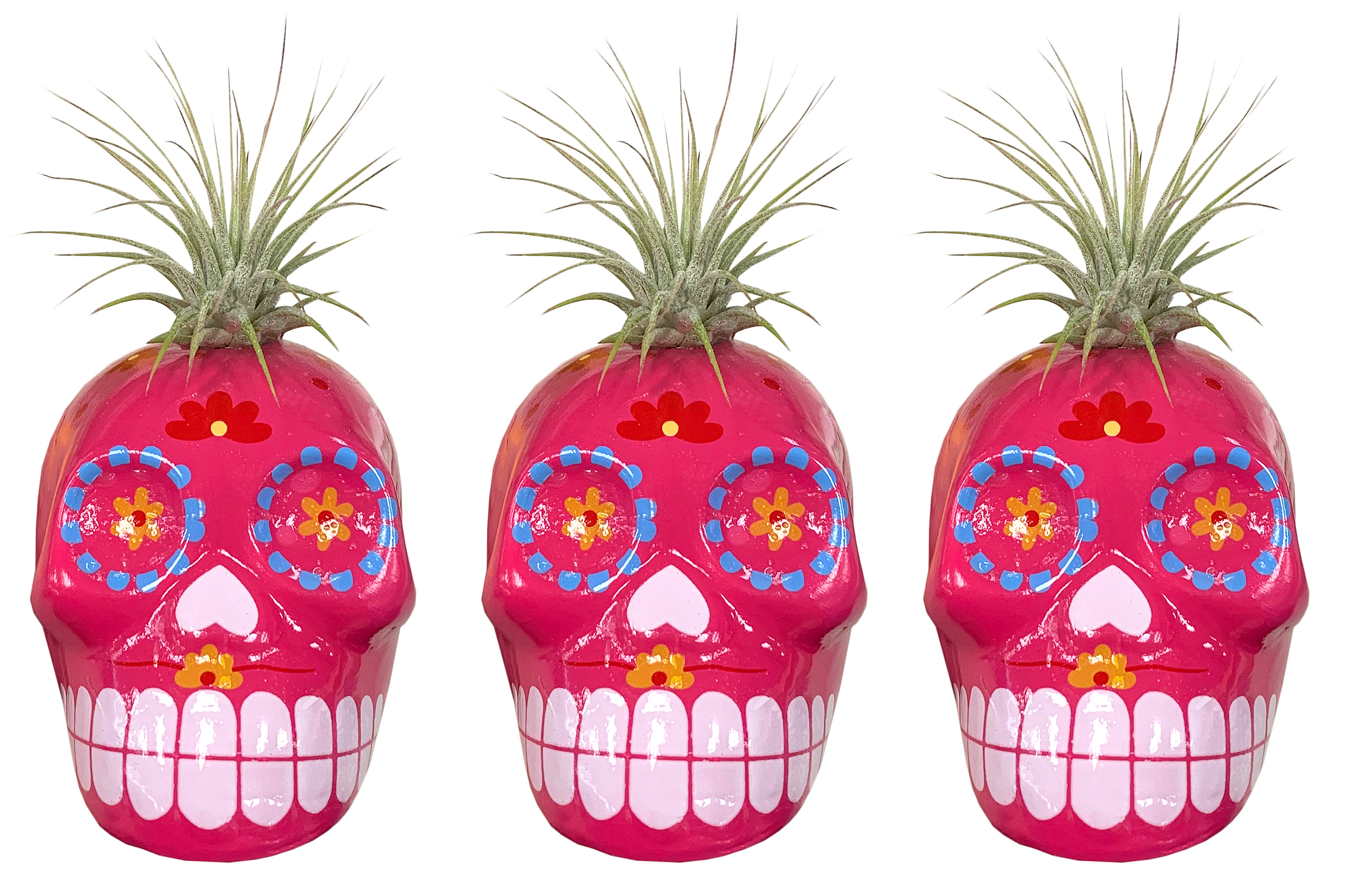 Trader Joe's Is Selling $4 Sugar Skull Succulent Planters to Celebrate Day of the Dead