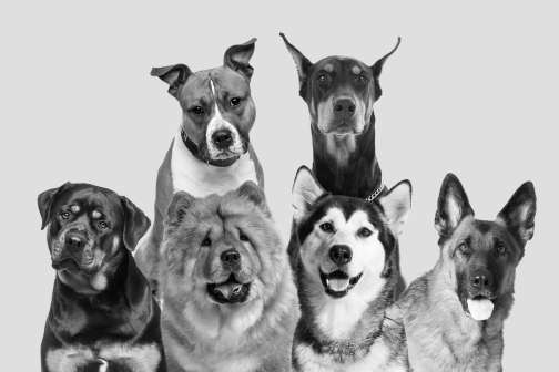 Bad Dogs: These Breeds Are the Worst for Your Home Insurance Policy