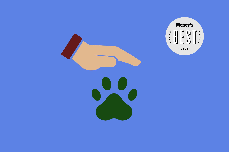10 Best Pet Insurance Companies Of 2020 Money Com