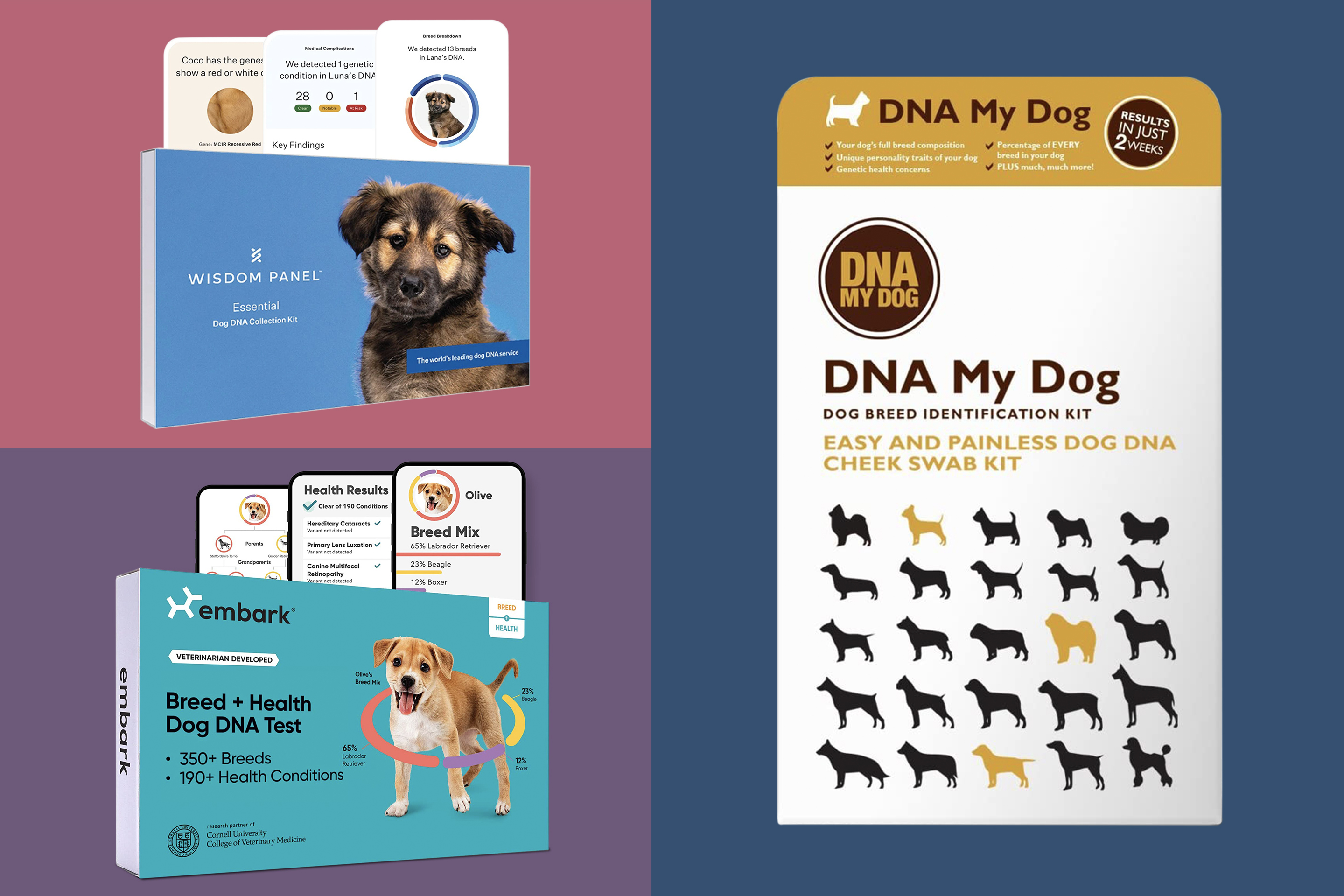 Best Dog DNA Test Kits for 2021 by Money | Money