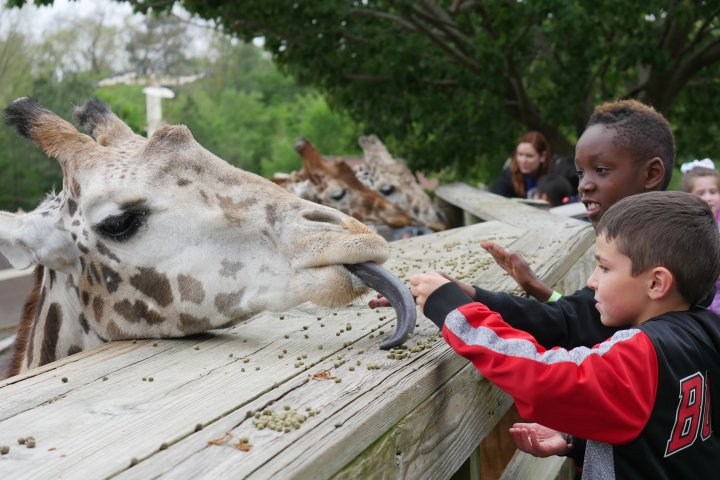 Two kids feed a giraffe at the zoo in Chesterfield County, Virginia
