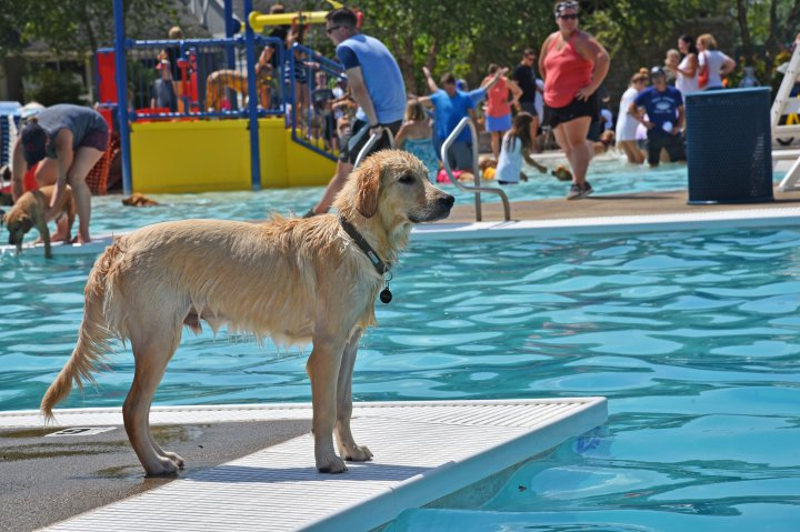 A dog looks out at the pool at Reed Road Water Park in Upper Arlignton Ohio